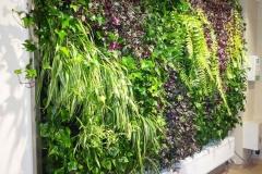 ogrod wertykalny w kolorze
