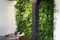 ogrod wertykalny w biurze