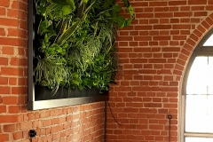 ogrod-wertykalny-w-restauracji