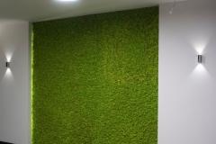 zielona sciana z chrobotka reniferowego