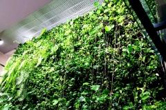 serwis zielonej sciany