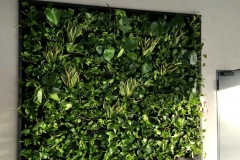 zielona sciana