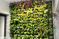 zielona-sciana-anturium