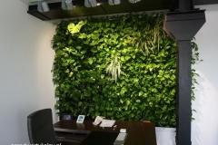 zielona sciana w biurze