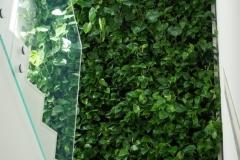 zielona sciana monstera