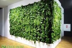 narożna zielona sciana