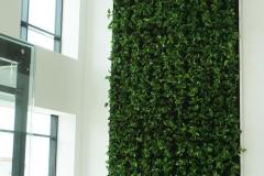 zielona sciana po obsadzeniu roslinami