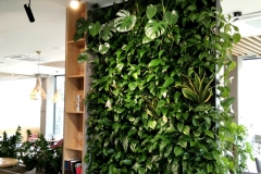zielona-sciana-restauracja-tychy