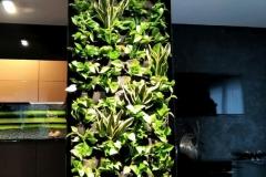 zielona-sciana-w-kuchni