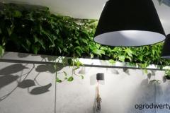 zielona sciana w restauracji