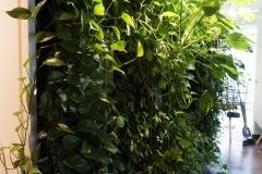 zielona sciana widok bokiem