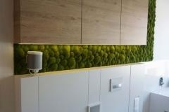 zielona sciana z mchu poduszkowego