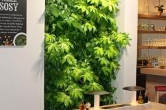 zielone sciany w restauracji