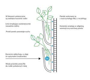 zasada-działania-ogrodu-wertykalnego-300x269