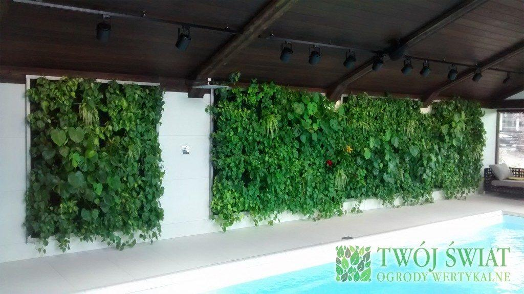 zielona ściana na basenie