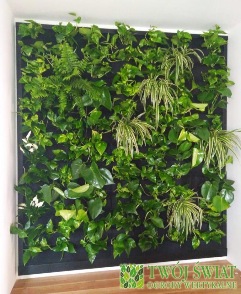 zielona ściana we wnęce
