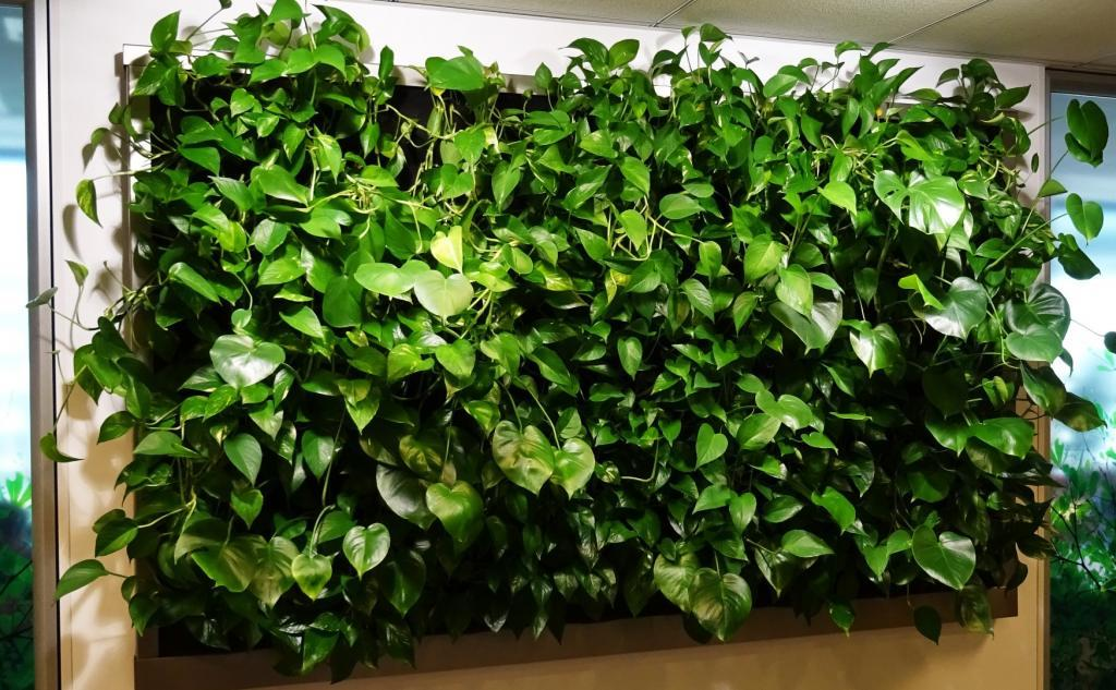 zielona ściana w recepcji