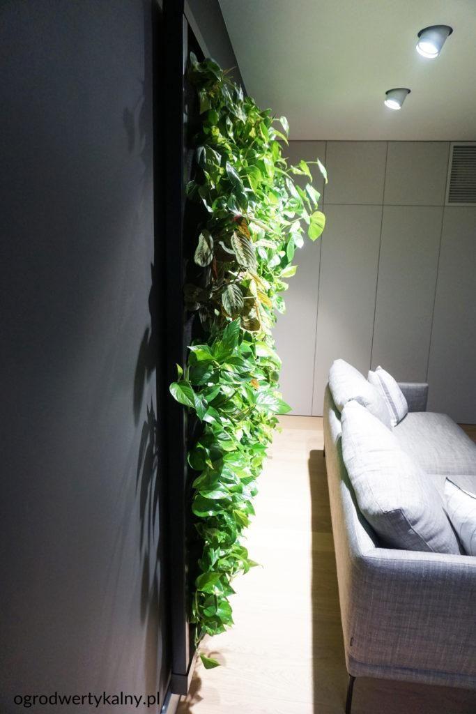 zielona ściana w pokoju