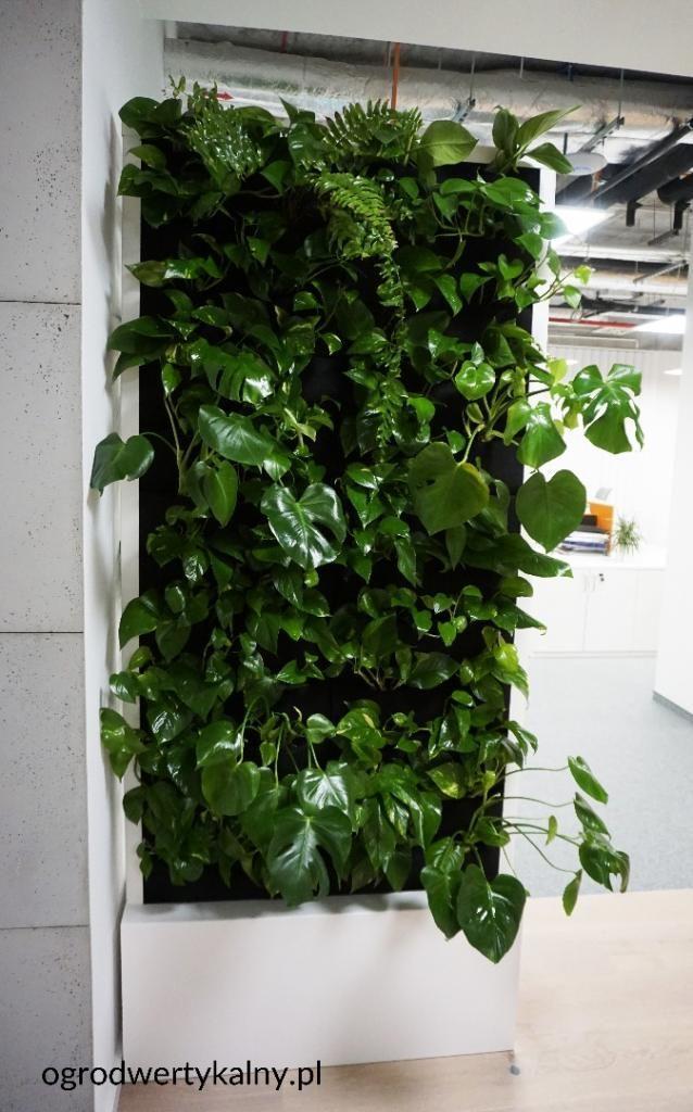 dwustronna zielona ściana