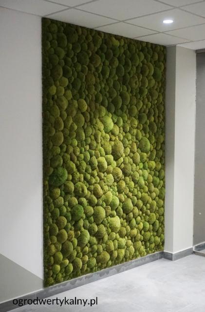 zielona sciana, mech poduszkowy