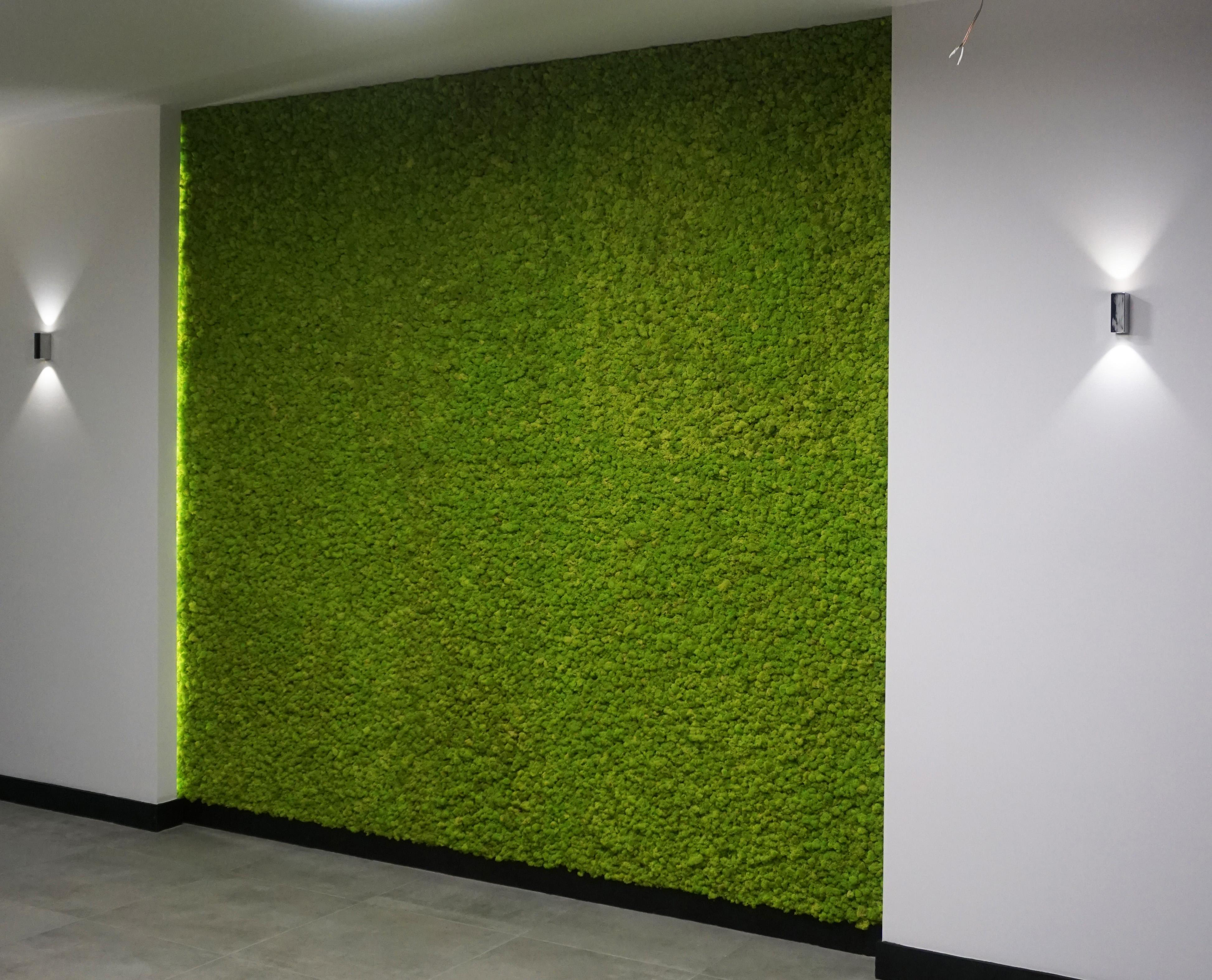 zielona sciana chrobotek