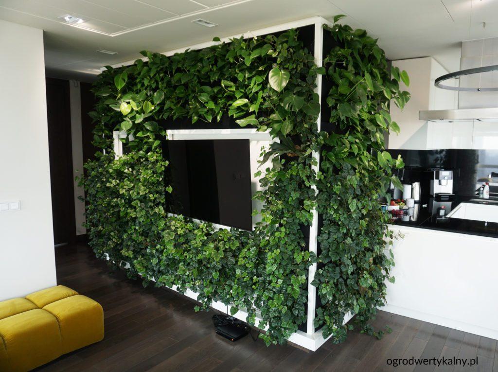 tv na zielonej ścianie