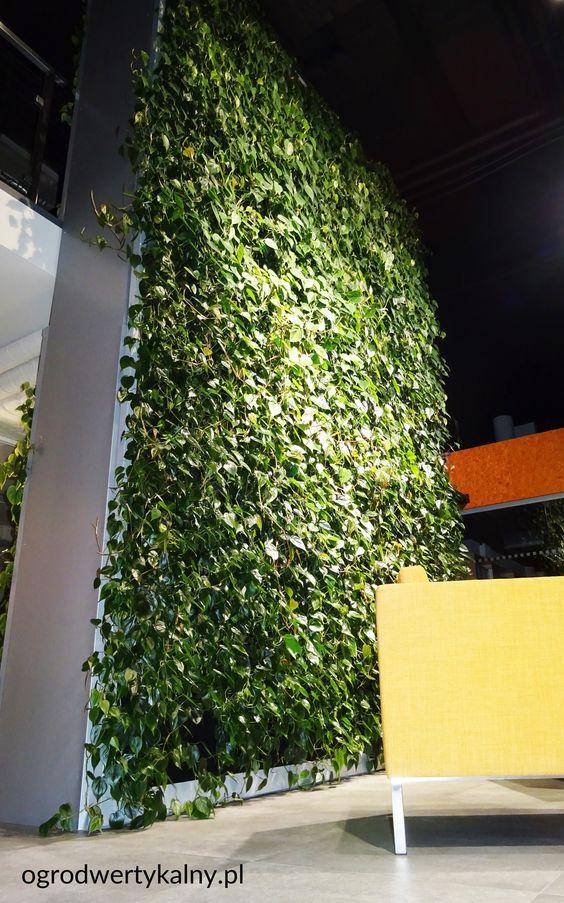 zielona ściana katowice