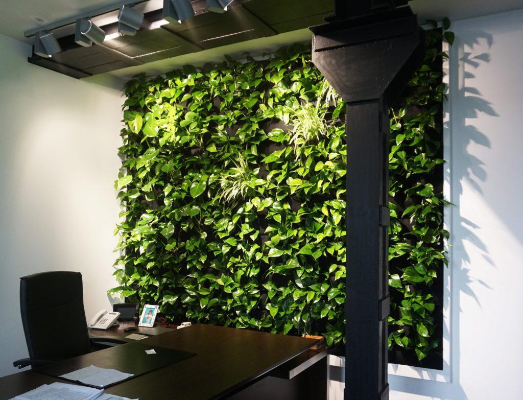 zielona sciana biuro