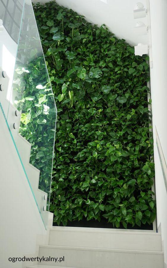 zielona sciana na schodach