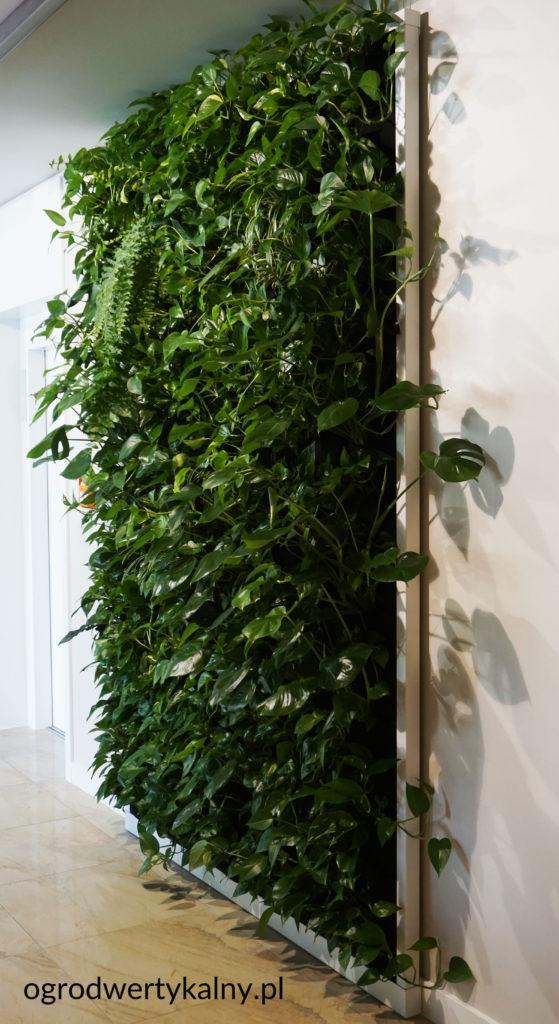 zielona sciana w hotelu