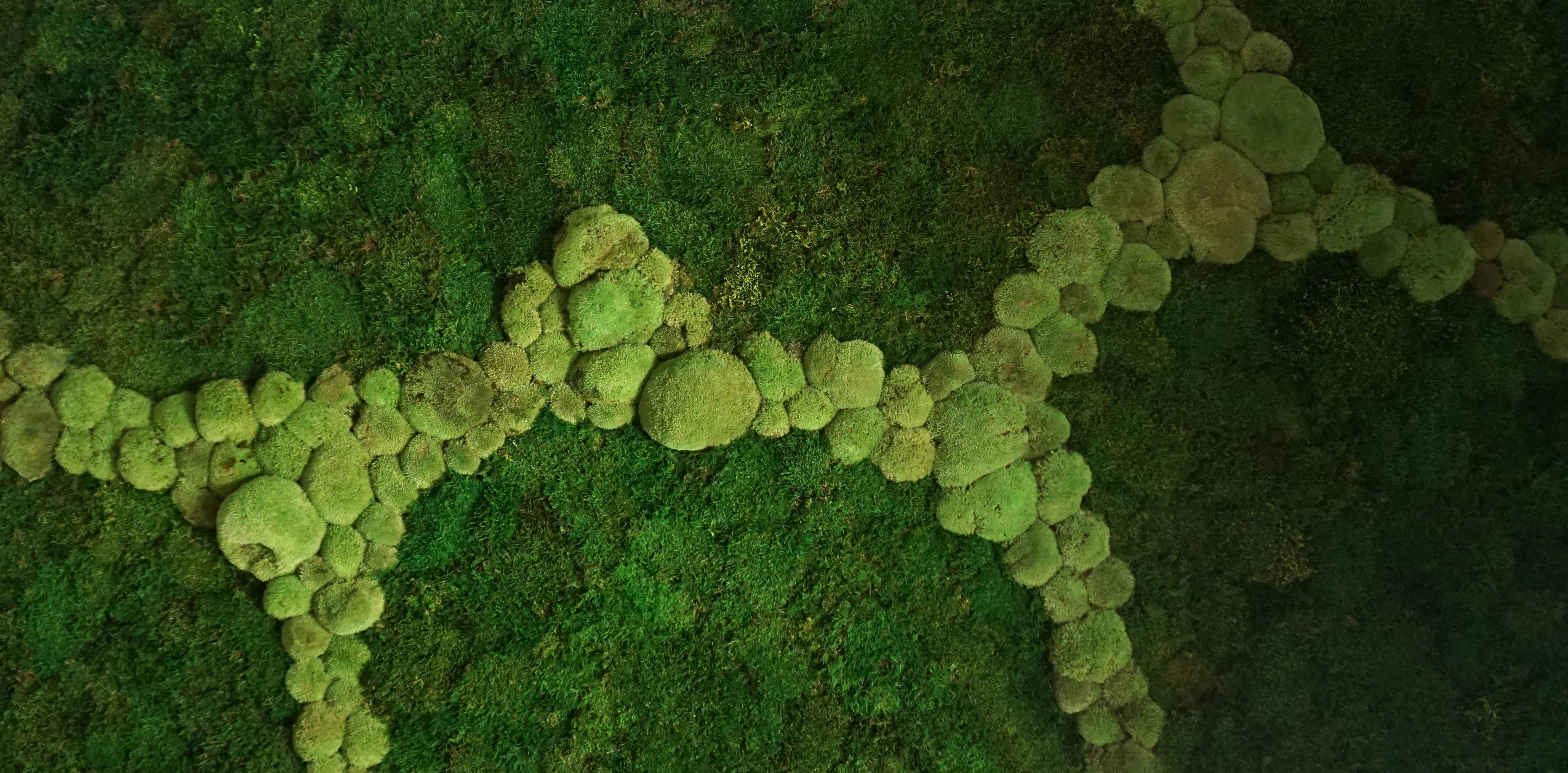 zielona sciana z mchu