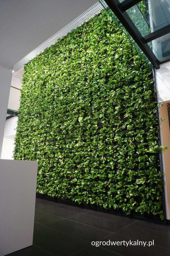 zielona-sciana-chorzów-682x1024