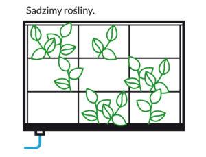 sadzimy-rosliny-300x229