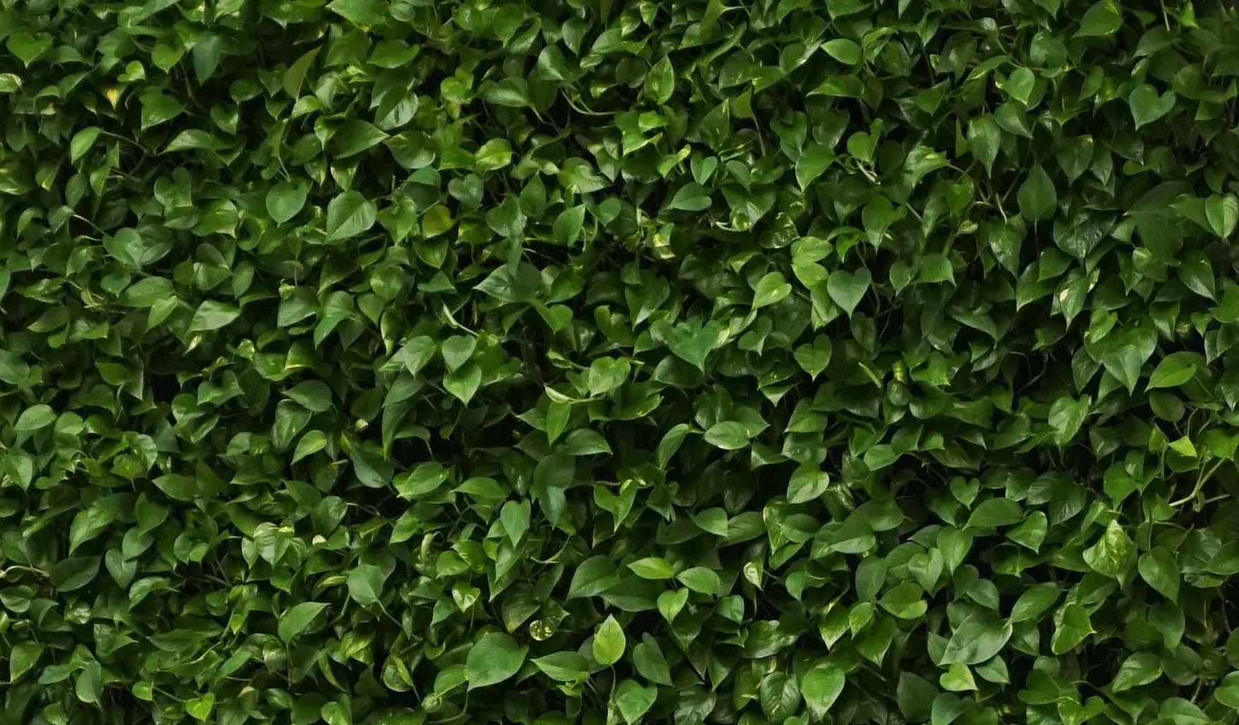 zielona-sciana