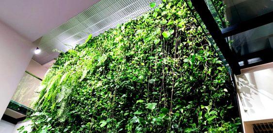 zielona-sciana-pielegnacja